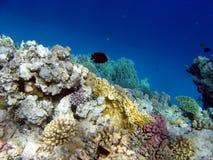 Paesaggio sotto acqua immagini stock