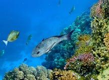Paesaggio sotto acqua fotografia stock