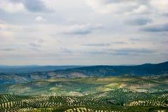 Paesaggio spagnolo con di olivo. Immagine Stock