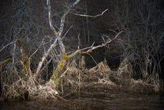 Paesaggio spaventoso con l'albero guasto Fotografia Stock Libera da Diritti