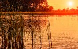 Paesaggio strabiliante Canne e tramonto arancio Vista fantastica Fotografia Stock Libera da Diritti