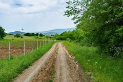 Paesaggio, strada non asfaltata e piantagioni verdi Fotografia Stock