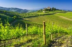 Paesaggio stupefacente delle vigne in Toscany, Italia Fotografie Stock Libere da Diritti