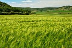 Paesaggio stupefacente di agricoltura in montagne di Macin fotografia stock