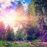 Paesaggio stupefacente di autunno alberi variopinti sopra il fiume della montagna Fotografie Stock