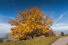 Paesaggio stupefacente di autunno sotto il supporto Rigi, alpi Immagine Stock Libera da Diritti