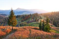 Paesaggio stupefacente di mattina di autunno in montagne con il prato ed in alberi variopinti su priorità alta e su nebbia sotto  Immagini Stock