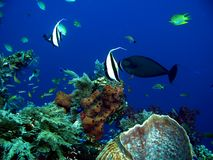 Paesaggio subacqueo Fotografia Stock