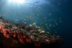 Paesaggio subacqueo Immagini Stock