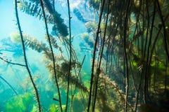 Paesaggio subacqueo del fiume fotografie stock
