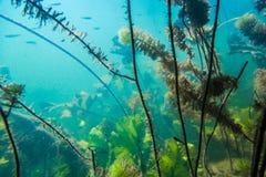 Paesaggio subacqueo del fiume fotografia stock libera da diritti