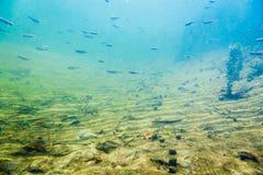 Paesaggio subacqueo del fiume con poco pesce fotografia stock