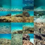 Paesaggio subacqueo del mondo Immagini Stock Libere da Diritti
