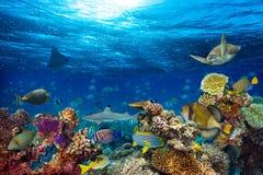 Paesaggio subacqueo della barriera corallina fotografia stock