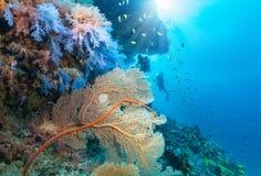 Paesaggio subacqueo nell'Oceano Indiano fotografia stock