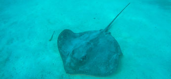Paesaggio subacqueo in Polinesia Fotografie Stock Libere da Diritti