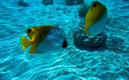 Paesaggio subacqueo in Polinesia Immagine Stock