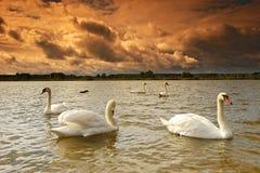 Paesaggio sul lago Fotografie Stock
