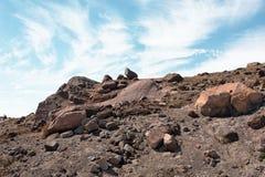 Paesaggio superiore della montagna sopra la riga di albero Immagini Stock Libere da Diritti