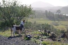Paesaggio sveglio del cane Fotografia Stock Libera da Diritti