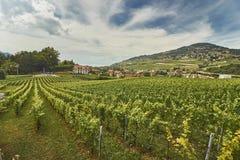 Paesaggio svizzero della vigna di estate Fotografia Stock Libera da Diritti