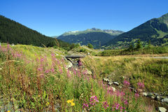 Paesaggio svizzero delle alpi Fotografia Stock Libera da Diritti
