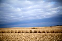 Paesaggio tempestoso dell'azienda agricola durante il raccolto di autunno Fotografie Stock Libere da Diritti