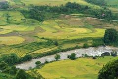 Paesaggio a terrazze del giacimento del riso con il fiume nella raccolta della stagione in Y Ty, distretto di Xat del pipistrello Immagini Stock