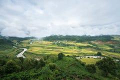 Paesaggio a terrazze del giacimento del riso con il fiume nella raccolta della stagione in Y Ty, distretto di Xat del pipistrello Fotografia Stock