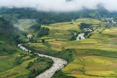 Paesaggio a terrazze del giacimento del riso con il fiume nella raccolta della stagione in Y Ty, distretto di Xat del pipistrello Fotografie Stock