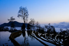 Paesaggio a terrazze, Yunnan, Cina Immagini Stock
