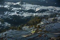 Paesaggio a terrazze, Yunnan, Cina Immagine Stock