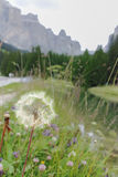 Paesaggio tipico delle dolomia di estate Immagini Stock Libere da Diritti