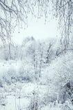 Paesaggio tonificato di inverno Immagini Stock Libere da Diritti