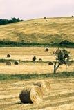 Paesaggio toscano tipico fotografia stock