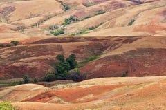 Paesaggio tradizionale della collina del Madagascar Fotografia Stock Libera da Diritti
