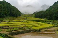 Paesaggio tradizionale giapponese della campagna della risaia del terrazzo Fotografia Stock
