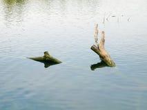 Paesaggio tranquillo dei tronchi di albero tagliati in acqua fotografia stock libera da diritti