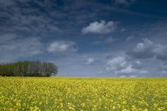 Paesaggio in tricolor Immagine Stock