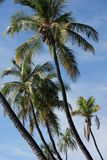 Paesaggio tropicale Immagine Stock
