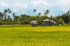 Paesaggio tropicale con la capanna e la palma Fotografie Stock Libere da Diritti