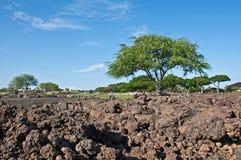 Paesaggio tropicale con la grande roccia della lava e dell'albero Fotografie Stock