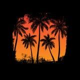 Paesaggio tropicale con le palme Fotografia Stock