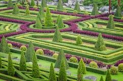 Paesaggio tropicale dell'albero delle piante ornamentali nel giardino della natura Fotografia Stock