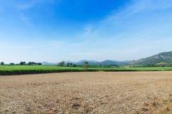 Paesaggio tropicale dell'azienda agricola di agricoltura del giacimento della canna da zucchero Immagini Stock Libere da Diritti