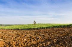 Paesaggio tropicale dell'azienda agricola di agricoltura del giacimento della canna da zucchero Fotografia Stock Libera da Diritti