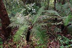 Paesaggio tropicale della foresta pluviale, ecosistema immagini stock libere da diritti