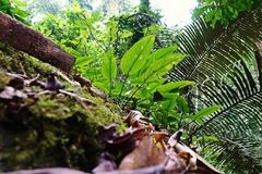 Paesaggio tropicale della foresta pluviale, ecosistema, Tailandia fotografia stock
