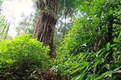 Paesaggio tropicale della foresta pluviale, ecosistema, Tailandia immagini stock