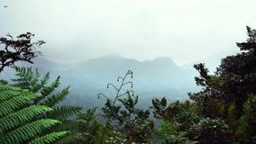 Paesaggio tropicale della montagna nella giungla con un cielo blu, le nuvole e la foschia stock footage